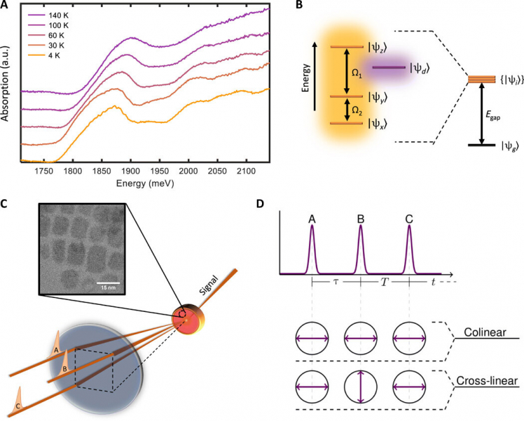 Multidimensional systematic spectroscopy exposes triplet state coherences in cesium lead-halide perovskite nanocrystals